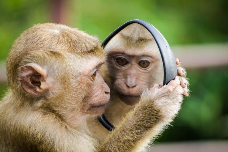 Con khỉ đại diện cho người tuổi Thân