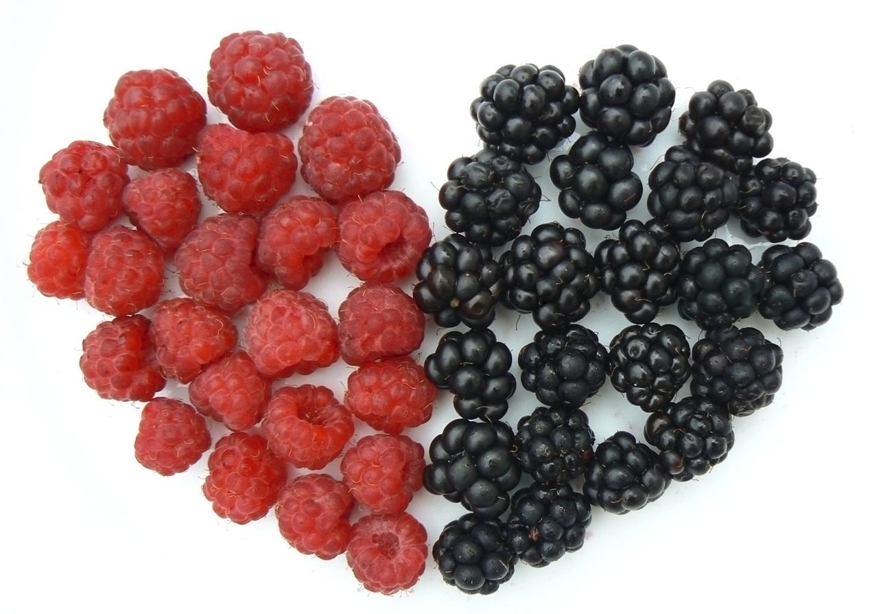Flavonoid giảm tình trạng trí nhớ kém