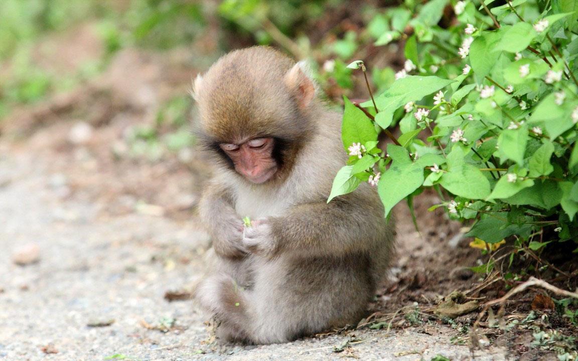 người tuổi khỉ