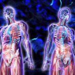 Thực phẩm lành mạnh giúp tăng chuyển hóa thúc đẩy quá trình giảm cân
