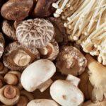 Nấm và các chất dinh dưỡng có lợi từ nấm đối với sức khỏe con người