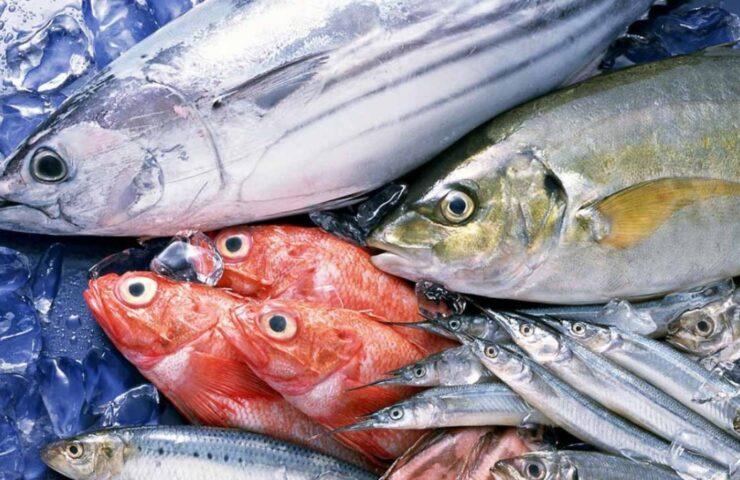 Cách rã đông cá đúng chuẩn, không nát hay mất chất, nhạt thịt